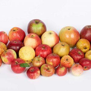 Obsthof am Steinberg - Apfelsorten - Wildlinge auf Löss