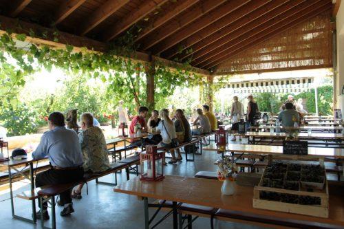 Obsthof am Steinberg - Galerie - Schoppenwirtschaft - Sommer mit Ausblick