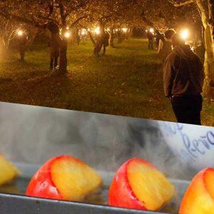 Obsthof am Steinberg - Kombiticket Fackelwanderung und Apfel-Raclette
