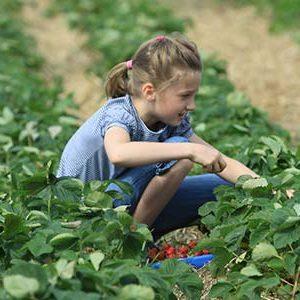 Obsthof am Steinberg - Kinderwanderung mit Erdbeerpflücke